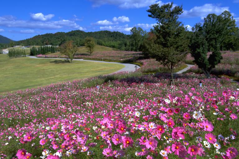 """鮮やかな花のパレット~まんのう公園""""秋!色どりフェスタ""""~"""