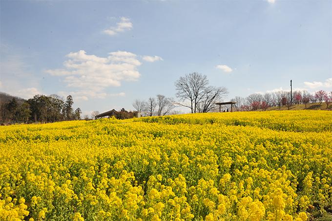 国営讃岐まんのう公園 『早春フェスタ』が開催されます
