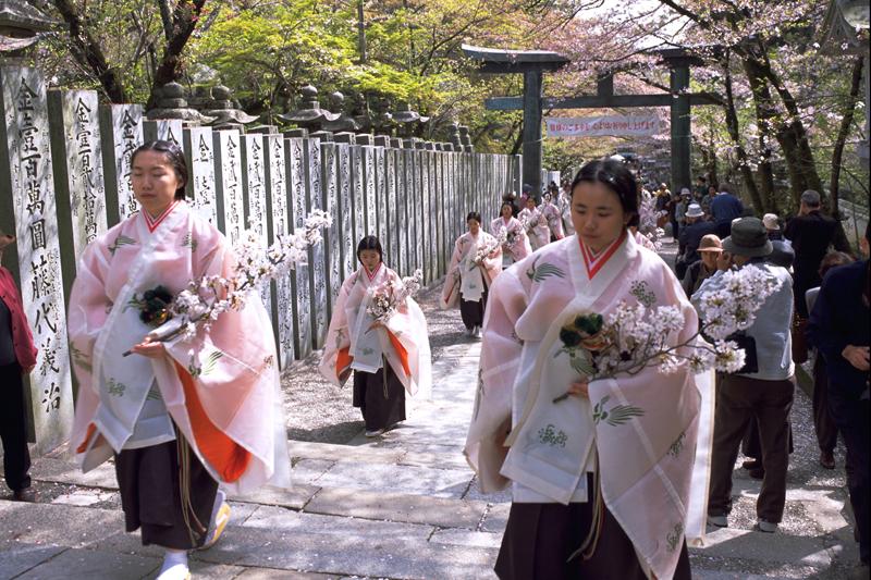 讃岐路に春の訪れを告げる ~金刀比羅宮『桜花祭』~